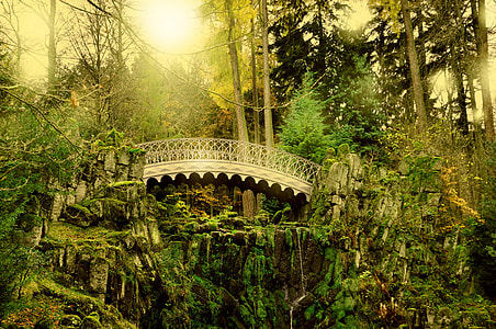 gray wooden bridge in forest
