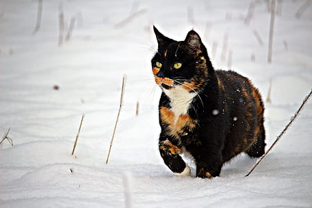 medium-coated black, brown, and white cat