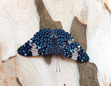 blue and black butterfly on brown wall