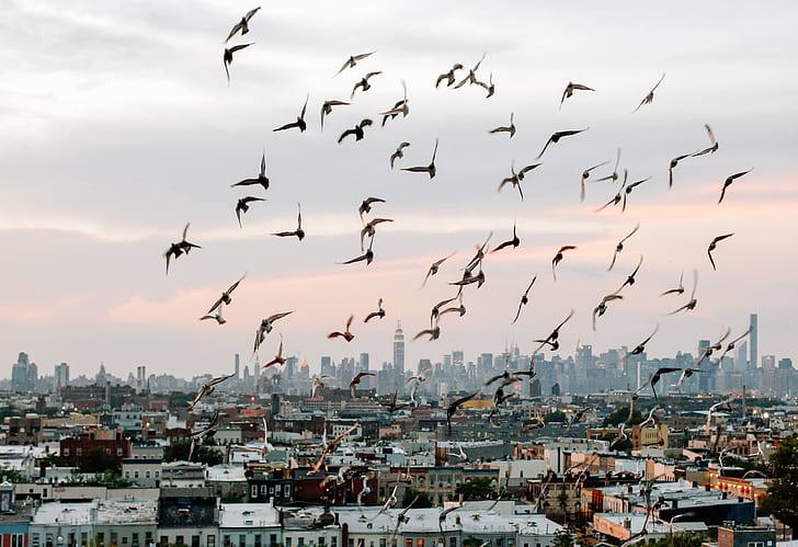 white birds flying over buildings