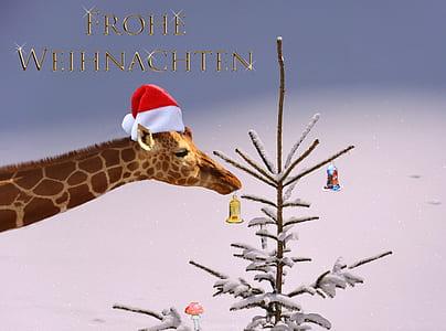 giraffe with Christmas hat illustration