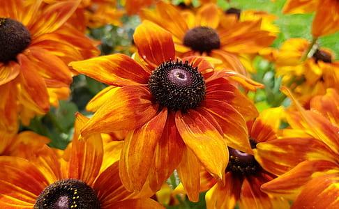 tilt shift photography of orange petaled flowers