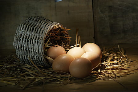 poultry eggs and basket