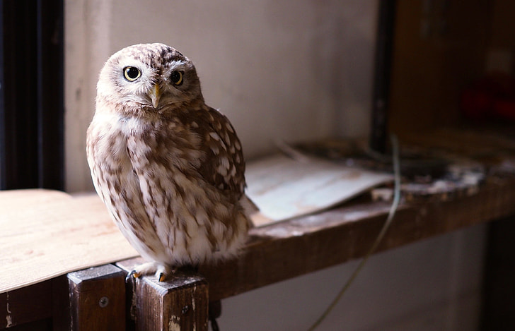 owl on brown wooden frame