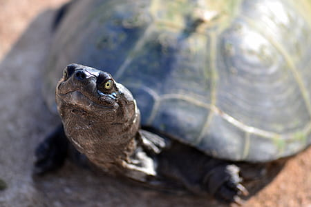 Turtle on Brown Ground