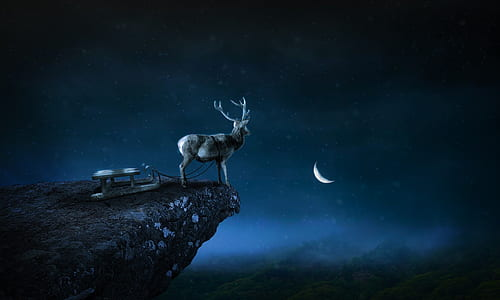 deer on top of mountain illustration