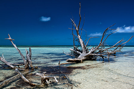 Seascape shot taken on the coast of a small tropical island off Cuba in the Caribbean. Image captured with a Canon DSLR
