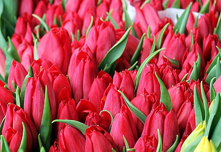 red petaled flower lot