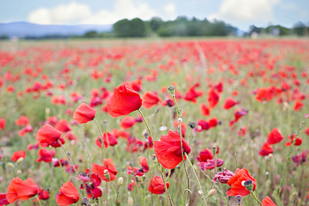 macro shot of red flowers in macro shot photography during daytime