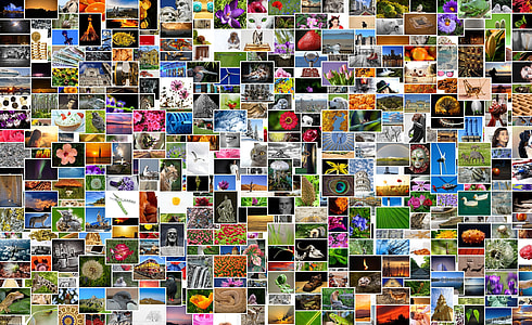 collage photo of flowers and birds