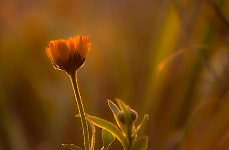 orange flower bud close-up photography