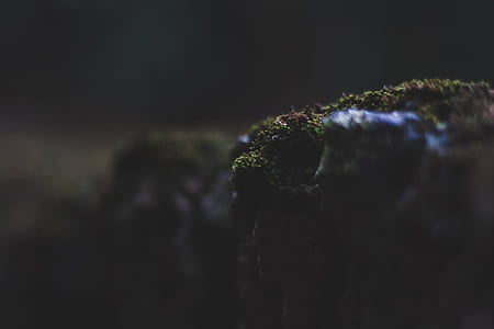 moss, stone, plant