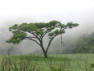 green tree on field