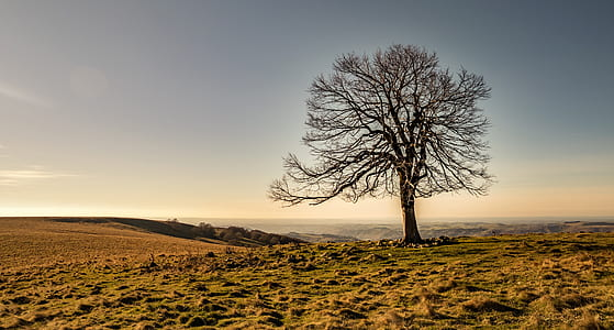 landscape photography of tree