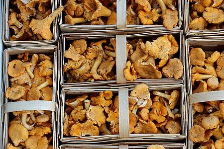 mushroom lot
