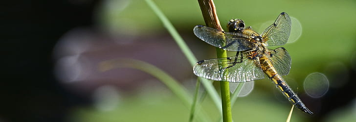 closeup photography of dragonfly