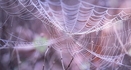 White Spider Web in the Forest during Faytime