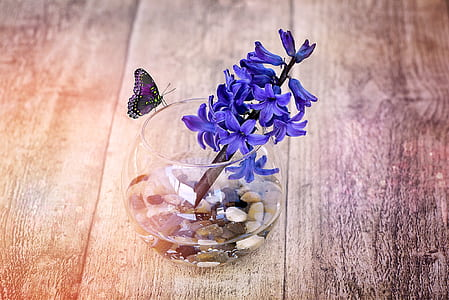 purple hyacinth flowers in clear glass fishbowl on brown wooden surface