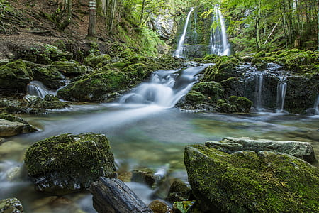 waterfalls surrounded by tall tress