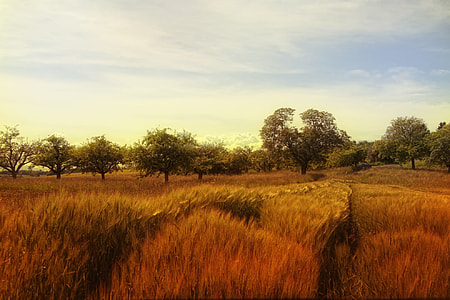 brown grass and green trees