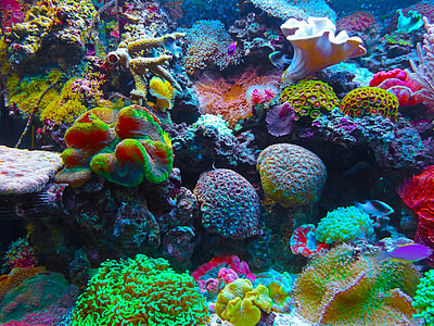 multicolored sea corals