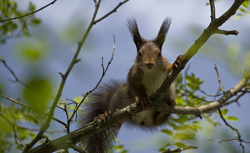 squirrel on branch during day