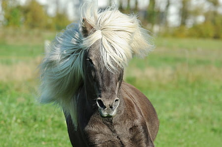 shallow focus photography of grey stallion during daytime