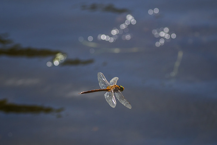 brown dragonfly flying during daytime