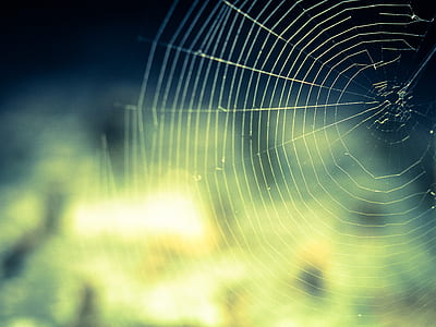 spider web shallow photography