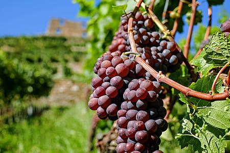 macro shot of red grape fruits