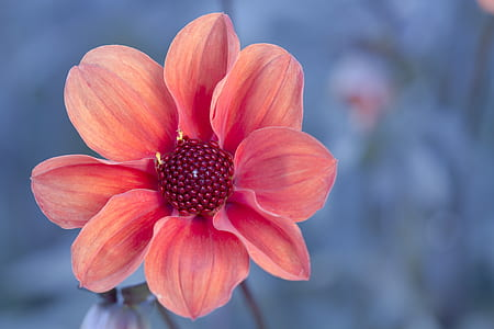 pink petaled flower in close up photo