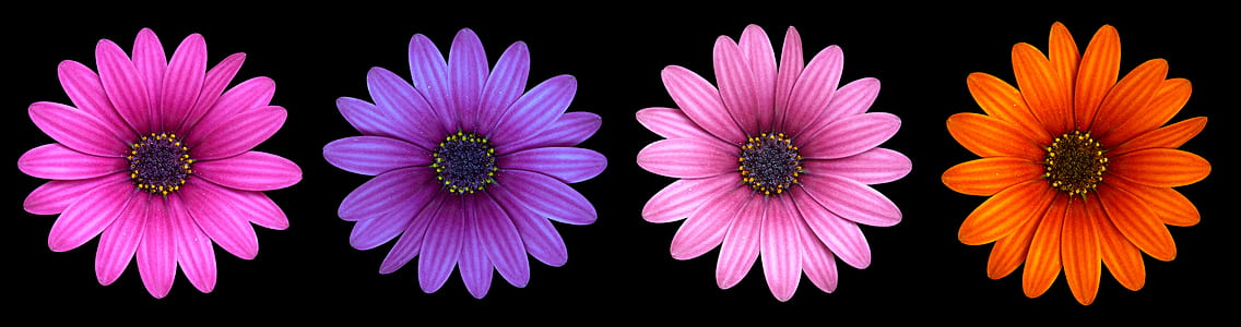 four assorted-color petaled flowers