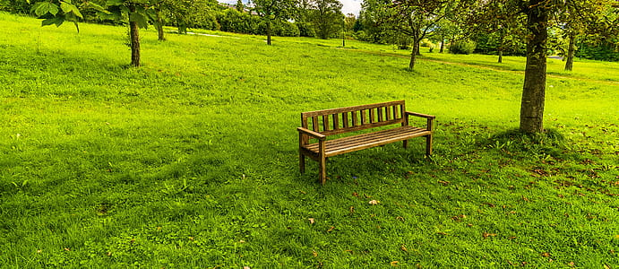 brown wooden bench on green grass lawn beside tree
