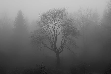 fogged bare tree