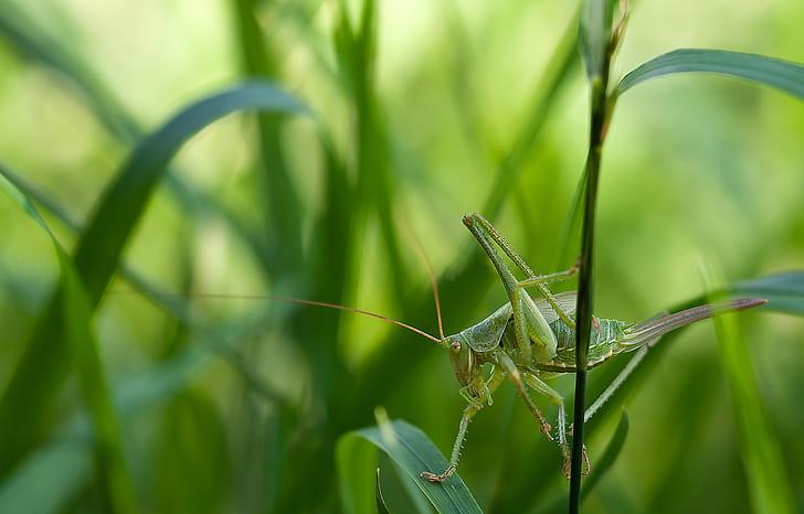 green grasshopper perched on green leaf
