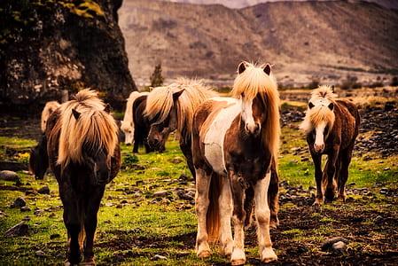 herd of brown horses on field