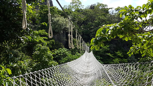 White Net Bridge Across Forest Under Clear Sky