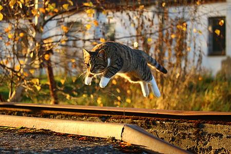 selective focus photograph of jump brown tabby cat