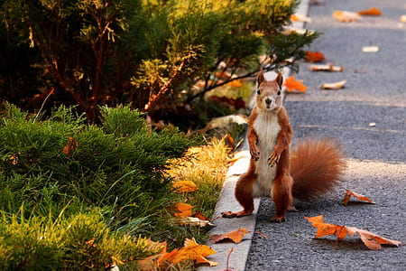 squirrel on street