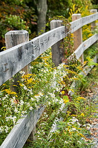 gray wooden gate with yellow and white petaled flowers taken during daytime