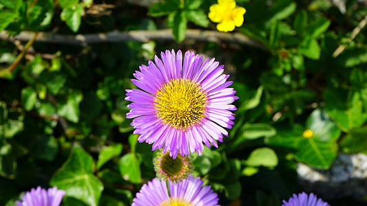 Royalty free photo macro photography of yellow and purple flowers purple and yellow flower 6000x3376 purple and yellow flowers mightylinksfo