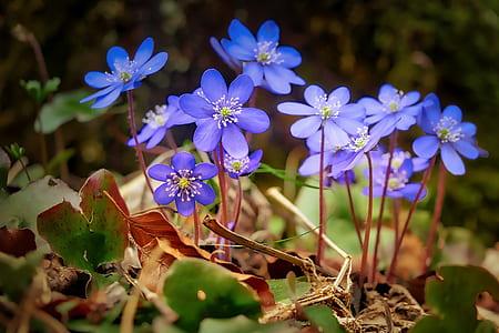 purple flowers in macro shot photography
