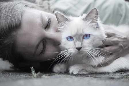 selective color photography of blue-eyed cat