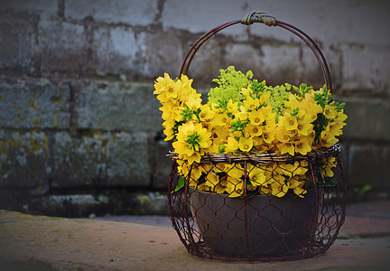yellow petaled flowers place on pot and basket