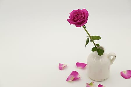pink rose in white ceramic vase
