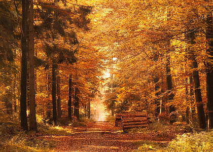 forest with autumn leaves