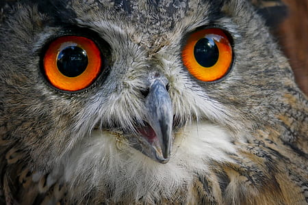 closeup photo of gray owl