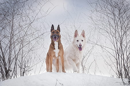 two dog standing on ice field during daytime