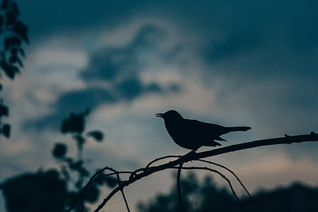 silhouette photography of bird perched on branch