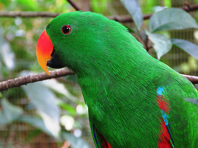 selective focus photo of green and red parrot